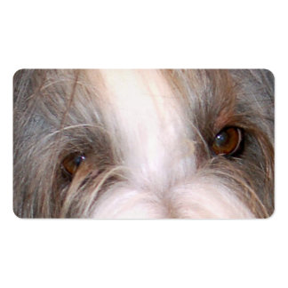 Bearded_collie eyes.png pack of standard business cards
