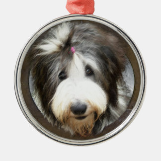 Bearded collie face in old wooden frame christmas ornament