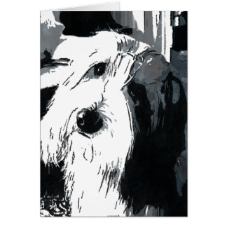Bearded Collie Greeting Card