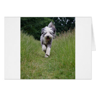 bearded collie in motion.png greeting card