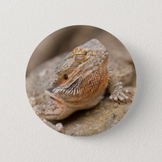 bearded dragon 6 cm round badge