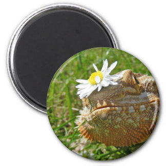 Bearded dragon 6 cm round magnet