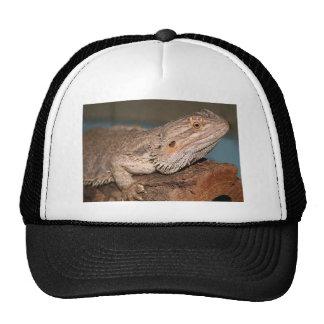 Bearded Dragon Cap