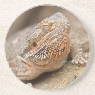 bearded dragon coaster
