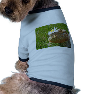 Bearded dragon dog clothes