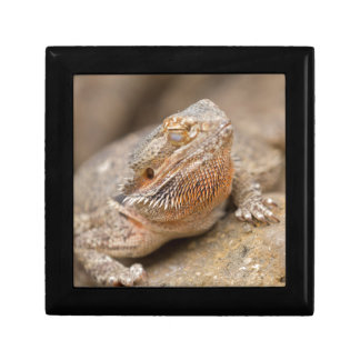 bearded dragon gift box