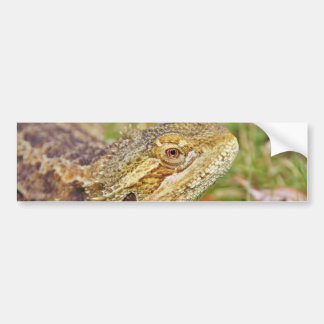 Bearded Dragon Head Bumper Sticker