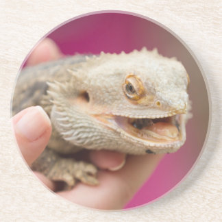 bearded dragon in the hand coaster