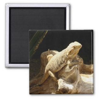 Bearded Dragon Lizard Square Magnet