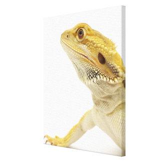 Bearded dragon (Pogona Vitticeps) Canvas Print