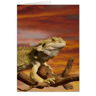 Bearded dragon (Pogona Vitticeps) on branch, Card