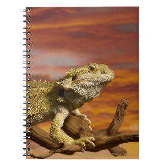 Bearded dragon (Pogona Vitticeps) on branch, Notebook