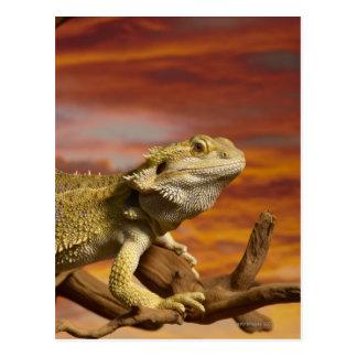 Bearded dragon (Pogona Vitticeps) on branch, Postcard