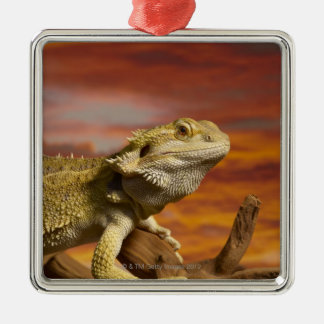Bearded dragon (Pogona Vitticeps) on branch, Silver-Colored Square Decoration