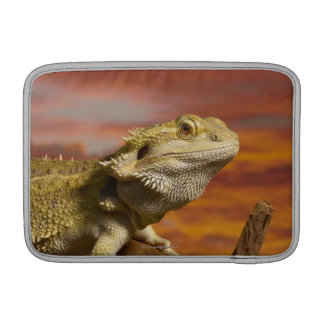 Bearded dragon (Pogona Vitticeps) on branch, Sleeve For MacBook Air