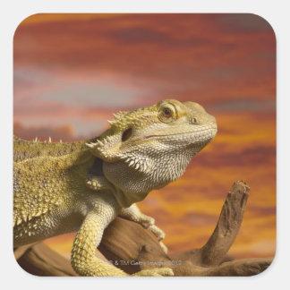 Bearded dragon Pogona Vitticeps on branch Sticker