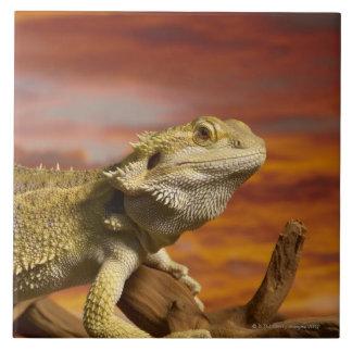 Bearded dragon (Pogona Vitticeps) on branch, Tile