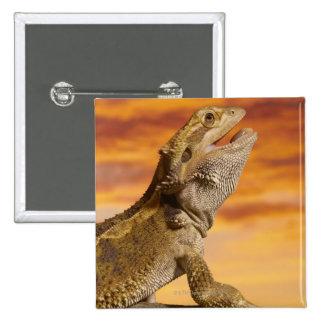 Bearded dragon (Pogona Vitticeps) on rock, 15 Cm Square Badge