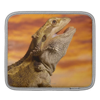 Bearded dragon (Pogona Vitticeps) on rock, iPad Sleeve