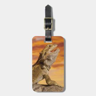 Bearded dragon (Pogona Vitticeps) on rock, Luggage Tag