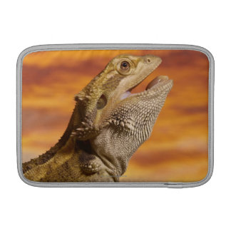 Bearded dragon (Pogona Vitticeps) on rock, MacBook Sleeve