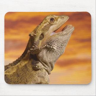 Bearded dragon (Pogona Vitticeps) on rock, Mouse Mat