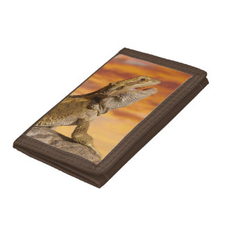 Bearded dragon (Pogona Vitticeps) on rock, Trifold Wallets