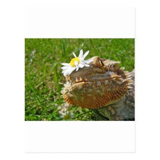 Bearded dragon postcard