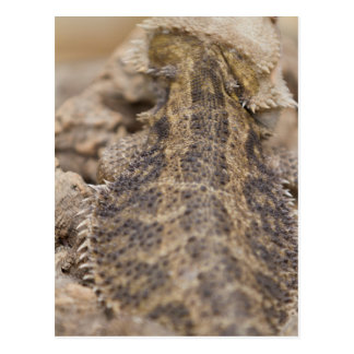bearded dragon postcard