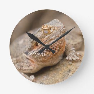 bearded dragon round clock