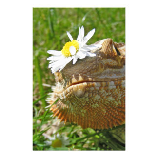 Bearded dragon stationery