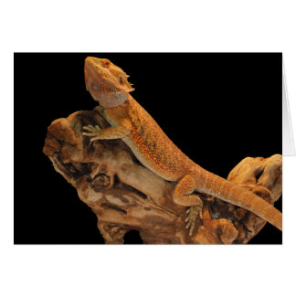 Bearded Dragon – Things Are Looking Up Greeting Card
