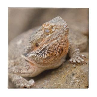 bearded dragon tile