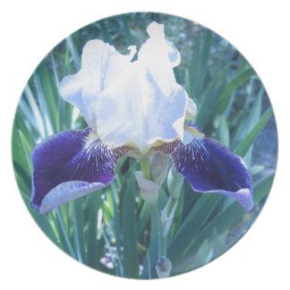 Bearded Iris Cultivar Mary Todd Party Plates