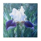 Bearded Iris Cultivar Mary Todd Tile