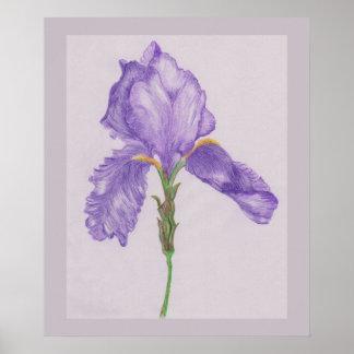 Bearded Purple Iris Poster