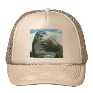 Bearded Seal Cap