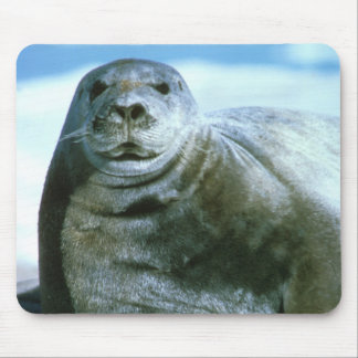 Bearded Seal Mouse Pad