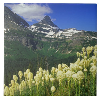 Beargrass at Logan Pass in Glacier National Park Large Square Tile