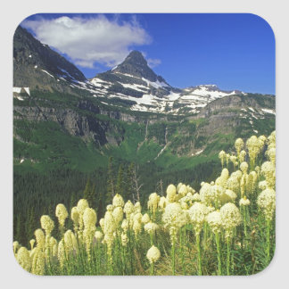 Beargrass at Logan Pass in Glacier National Park Square Sticker