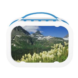 Beargrass near Logan Pass in Gacier National Lunchboxes