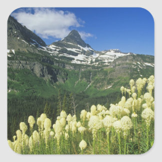 Beargrass near Logan Pass in Gacier National Square Stickers