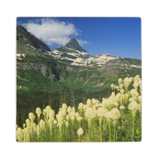 Beargrass near Logan Pass in Gacier National Wood Coaster