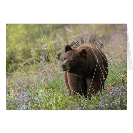 Bears of Alaska - blank card