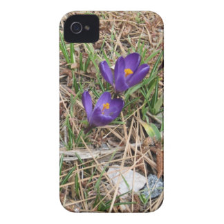 Beatiful Purple Mountain Iris 2 Case-Mate iPhone 4 Cases