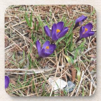 Beatiful Purple Mountain Iris 2 Drink Coasters