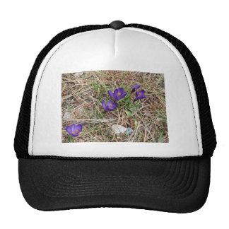 Beatiful Purple Mountain Iris 2 Hats