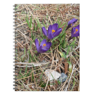 Beatiful Purple Mountain Iris 2 Notebooks