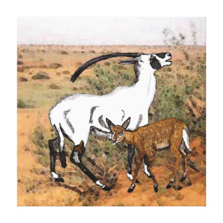 Beatrix Oryx  (Oryx  leucoryx  beatrix) And Calf Gallery Wrapped Canvas