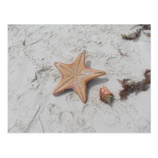 Beau Bahamas Starfish Shell Postcard